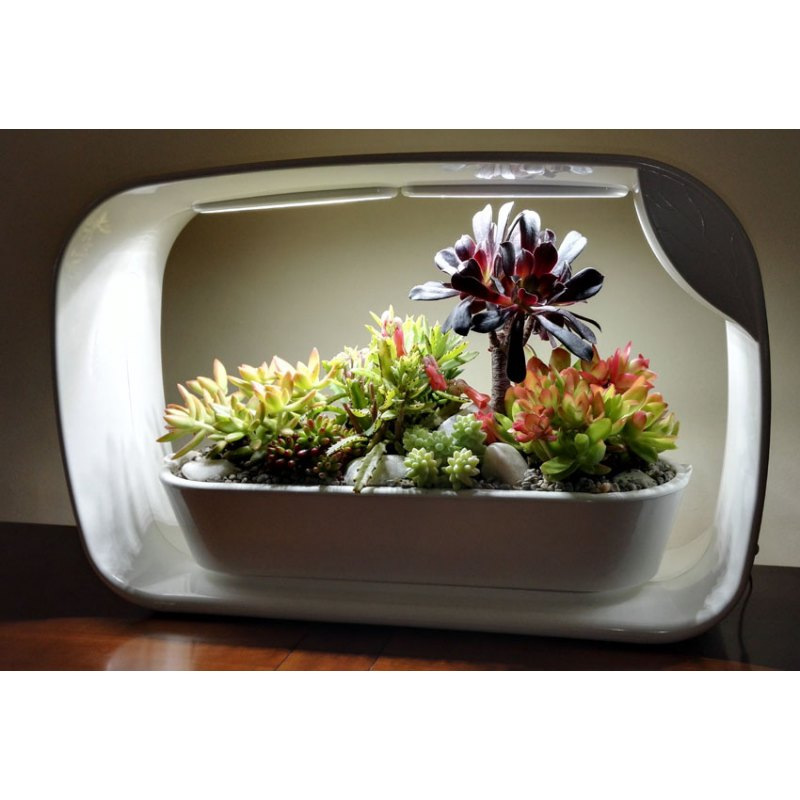 Cachalo Com Jardinice Serre De Table Hydroponique Transportable